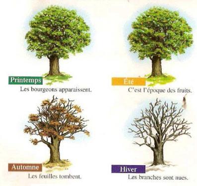 Reproduction végétale